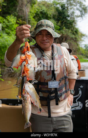 Crewmember of Zafiro on the Peruvian Amazon displays catch of Piranha (Characiformes)caught by guests in skiff. - Stock Photo