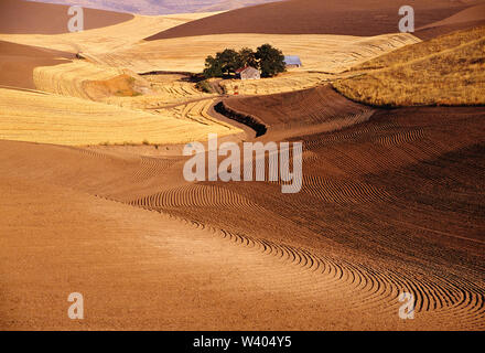 USA. Washington. Farmstead surrounded by rolling wheat and ploughed fields. - Stock Photo