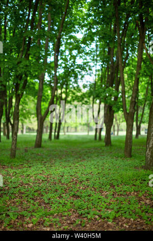 Green summer forest. Alley in the park. Blur and bokeh. - Stock Photo