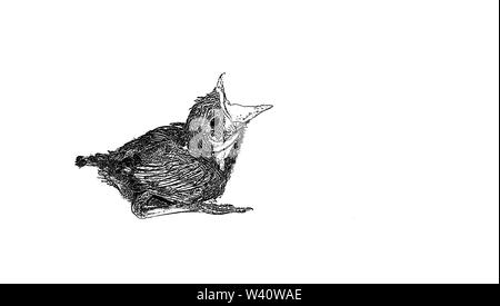 sketch of baby humming bird sitting on white sheet  opened mouth for feed,blurred background,vector illustration. - Stock Photo