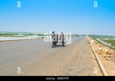 Rahim yar khan, Punjab,Pakistan-June 23,2019: a villager sitting on a horse cart on a high way,a man is driving a horse cart on a road. - Stock Photo