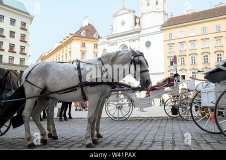 Pair of white horses in harness, vintage style. Old horse-drawn carriage riding on city street at Hofburg palace in Vienna, Austria - Stock Photo