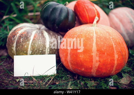 Different kinds of pumpkins on a grass background with paper for the signAutumn harvest. Season product - Stock Photo