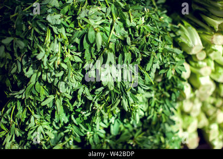 Fresh herbs dill, parsley, spinach, mint, wild garlic at market. Organic vegetables and fruits - Stock Photo