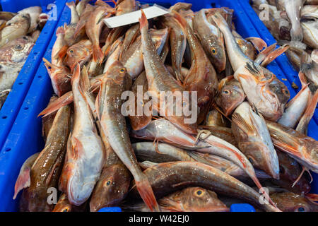 Fresh fish red mullet, barbun seafood for sale at a store display in Rotterdam Netherlands. Close up view - Stock Photo