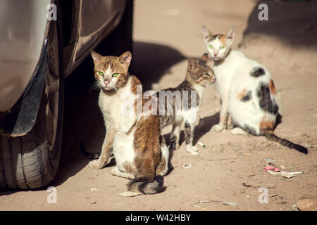 A group of three homeless cats on the city street - Stock Photo