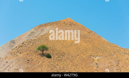 Lonely tree on a mountain top - Stock Photo