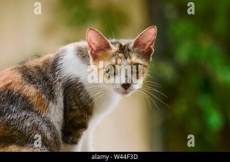 calico cat sitting profile with turned head - Stock Photo
