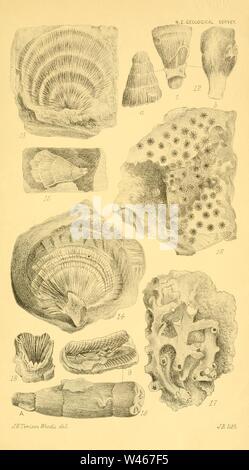 Corals and bryozoa of the neozoic period in New Zealand (Figs. 12-19) - Stock Photo