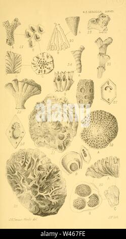 Corals and bryozoa of the neozoic period in New Zealand (Figs. 20-32) - Stock Photo