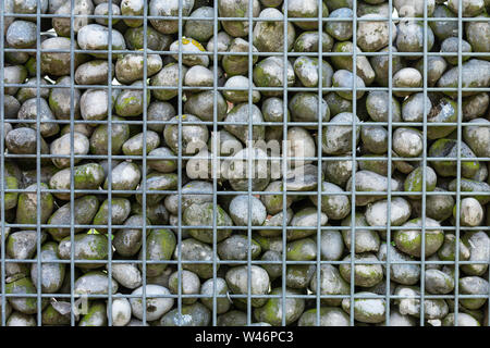metal stone baskets filled with round stones used as wall - Stock Photo