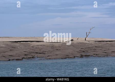Dead tree on a sandbank in the estuary of the Rio Platana,l Panama - Stock Photo