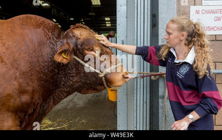 Llanelwedd, UK. 21st July, 2019. Farmers prepare their animals for showing, on the eve of the 100th Royal Welsh Agricultural Show held at Llanelwedd, Builth Wells, Wales. Credit: James Davies/Alamy Live News - Stock Photo