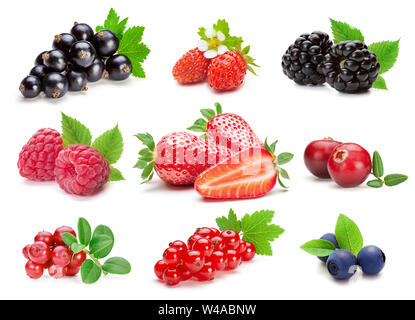 Set of various wild and garden berries, isolated on the white background. - Stock Photo