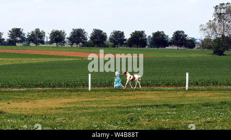 An Amish Girl Teaching a New Young Painted Horse to Run - Stock Photo