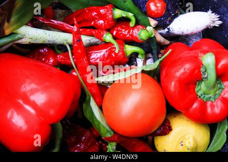 Wastage of fresh food: Close up of fresh red vegetable (bell pepper, tomato, chilis) in waste bin - Stock Photo