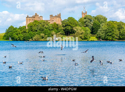 Linlithgow Loch and Linlithgow Palace, with guls, Scotland, UK - Stock Photo