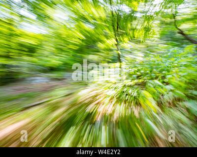 Green forest countryside speeding in curve through dense trees natural environment induced inducing vertigo motion - Stock Photo