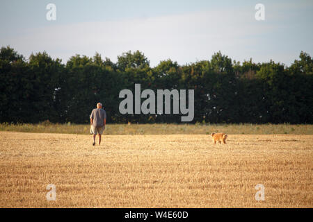 Man and a dog walk along a mowed field of wheat, a golden stubble after harvest. - Stock Photo