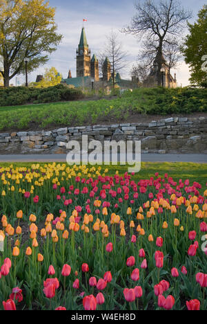 Spring Tulips in Ottawa Ontario Canada with Parliament Peace Tower in the Background - Stock Photo