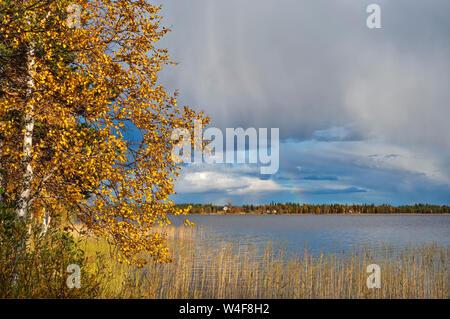 rainbow over Yllasjarvi Lake, Scot's Pine (Pinus sylvestris), Birch (Betula pubescens), Ruska time (autumn),Lapland, Finland - Stock Photo