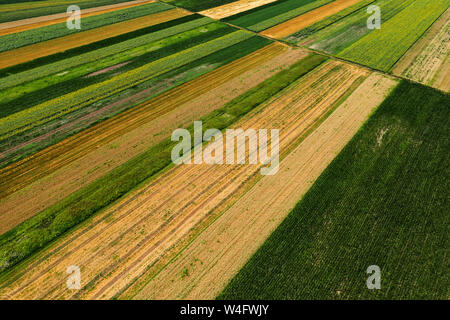 Aerial view of cultivated agricultural fields in summer, beautiful countryside patchwork landscape from drone pov - Stock Photo