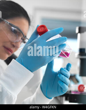 Human cell research, Female cell biologist examining a flask containing stem cells, cultivated in red growth medium in the laboratory - Stock Photo