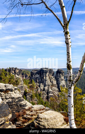 View to Elbe Sandstone Mountains with birch tree in the foreground, Saxony, Germany - Stock Photo