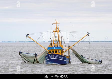The crab cutter POLARIS, fishery number NEU230, in the Wadden Sea between Neuharlingersiel, Spiekeroog and Langeoog. East Frisian Islands, Lower Saxony, Germany   ---   Der Krabbenkutter POLARIS, Fischereinummer NEU230, im Wattenmeer zwischen Neuharlingersiel, Spiekeroog und Langeoog. Ostfriesische Inseln, Niedersachsen, Deutschland - Stock Photo