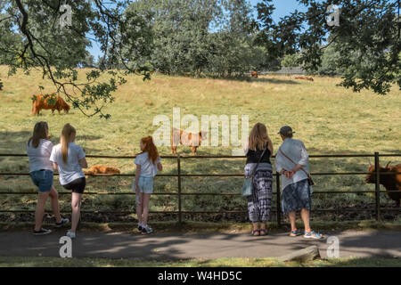 Glasgow, Scotland, UK. 23rd July, 2019. UK Weather: Hot and Sunny in Pollok Country Park. Credit: Skully/Alamy Live News - Stock Photo