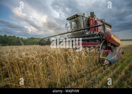 harvester removes wheat field on the background of the sunset cloudy sky - Stock Photo