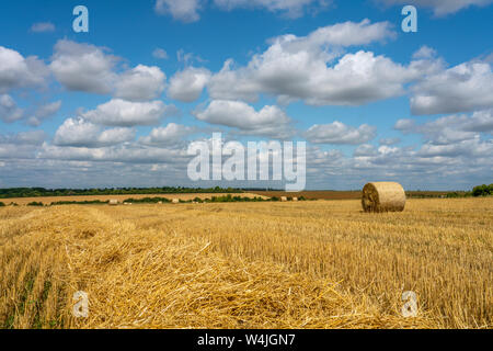 large rolls of straw lie on the harvested wheat field against the background of the Sunny blue sky - Stock Photo