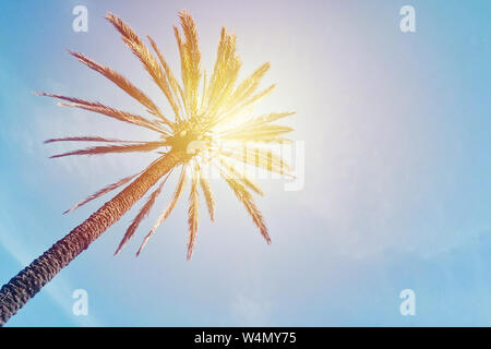 Abstract palm tree against blue sky background with trendy sunshine effect. Low angle view template with copy space - Stock Photo