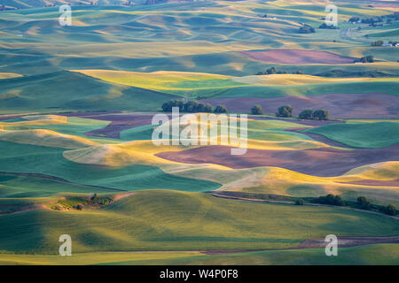 Golden hour sunset aerial view of The Palouse region of Eastern Washington State, as seen from Steptoe Butte State Park, of patchwork style rolling fa - Stock Photo