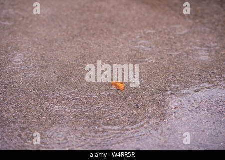 Yellow autumn leave on wet asphalt road during rain - Stock Photo