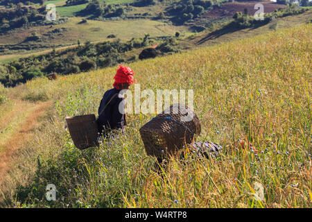Local farmers working in the highlands around Kalaw and Inle Lake, Myanmar. - Stock Photo