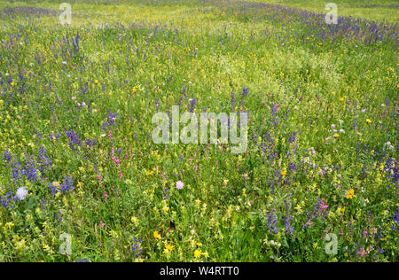 Blumenwiese - Stock Photo