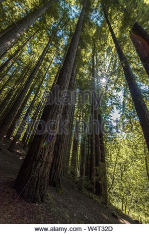 View from the inside of a forest in northern Spain in autumn - Stock Photo