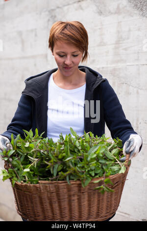 Gardening fresh herbs in summer  woman with wooden basket full of fresh herbs ment peppermint tea - Stock Photo