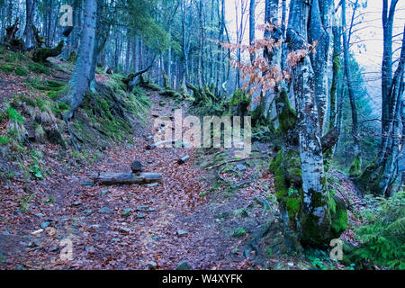 Abandoned road in a mysterious mystical autumn forest. Mountain path in the woods between the dry, moss-covered trees. Fairy tale, Dark mood of Hallow - Stock Photo