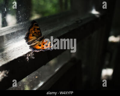 Shining Butterfly In Chernobyl - Stock Photo