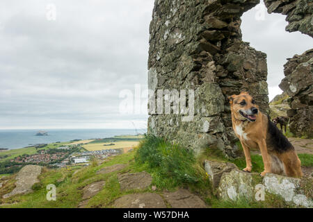 Photo bombed twice by another dog on top of North Berwick Law by the ruin, East Lothian, Scotland - Stock Photo