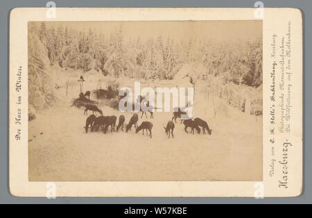 Wilde deer are fed in the winter Harzburg. Photographic Moment-Aufnahme. Die Wildfütterung auf dem Molkenhause (title on object) The Harz in Winter (series title on object), main animals: deer, feeding wild animals in winter, Harz, A. Wille (mentioned on object), 1850 - 1900, cardboard, photographic paper, albumen print, h 107 mm × w 166 mm Stock Photo