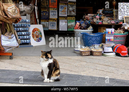 A friendly feral cat sits outside a souvenir shop in Jerusalem's Old City near Jaffa Gate. - Stock Photo