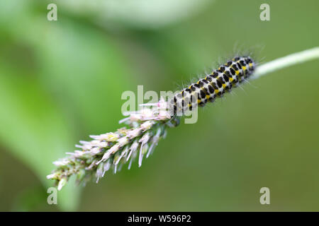 Makro Raupe auf Grashalm - Stock Photo