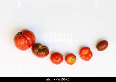 Tomaten mit Basilikum auf weißem Hintergrund - Stock Photo