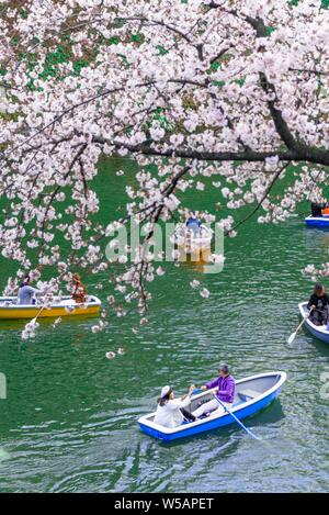 Japanese rowing in boats on the Imperial Palace canal to cherry blossom, Hanami moored, blossoming cherry trees, Chidorigafuchi Green Way, Tokyo - Stock Photo