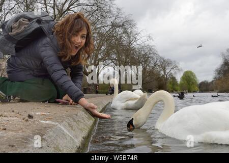 Asian woman feeding a Mute swan (Cygnus olor) in Regent's Park, London, UK, March. Model released. - Stock Photo