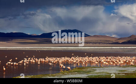 A big flock of flamingos in Laguna Colorada. Colorful salt lake and dramatic thunder clouds (on background)  in Sur Lipez province, Potosi, Bolivia. - Stock Photo
