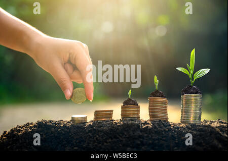 Money growth Saving money. Upper tree coins to shown concept of growing business - Stock Photo